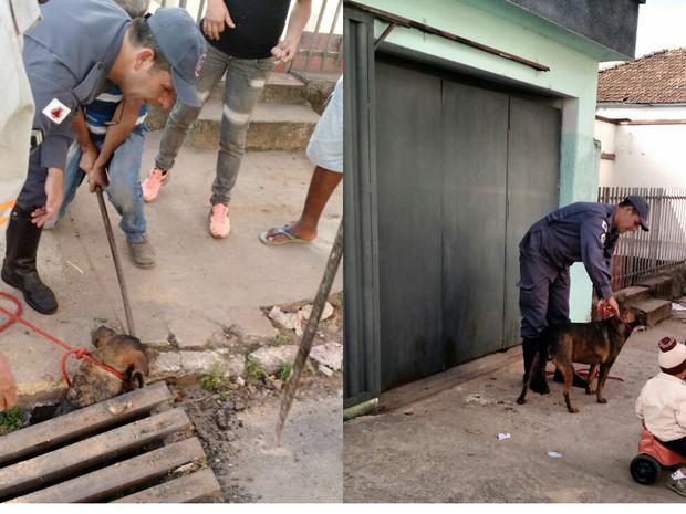 Cão é resgatado após cair em bueiro de Lavras, MG (Foto: Corpo de Bombeiros/Lavras)